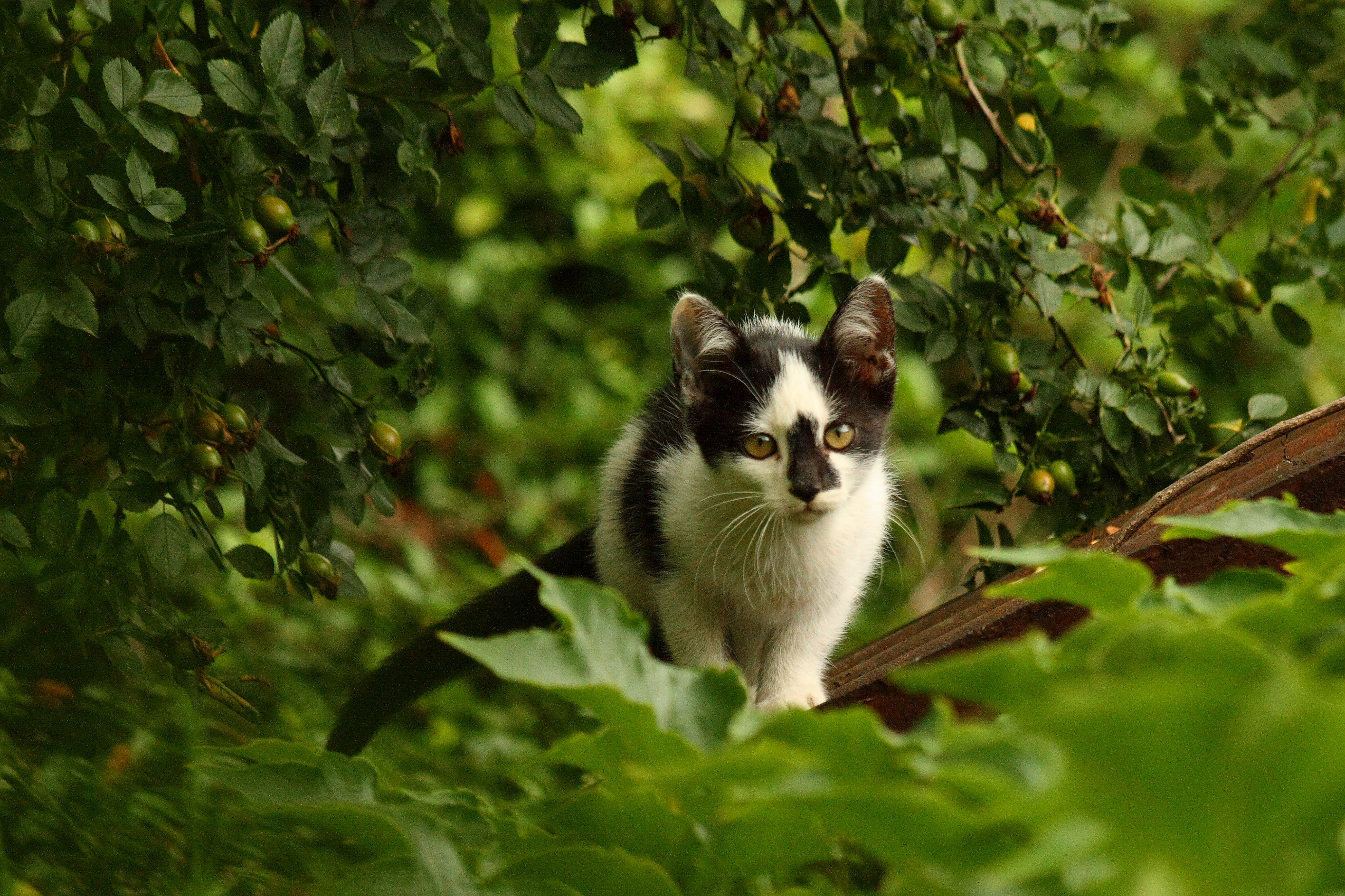 how can i get rid of cat urine smell outside